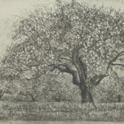 "Moishe Smith ""Green Apples"" 1972 etching"