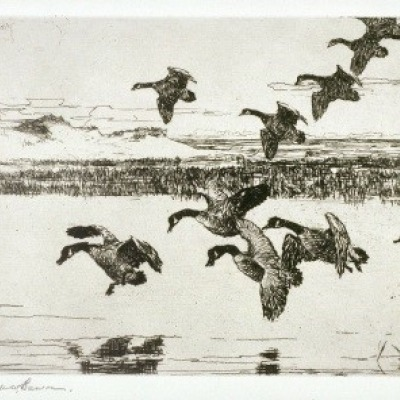Tired Geese by Frank Weston Benson, 1935 Etching