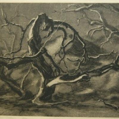 Drought Stricken Willow by Dwight Kirsch, Etching 1936