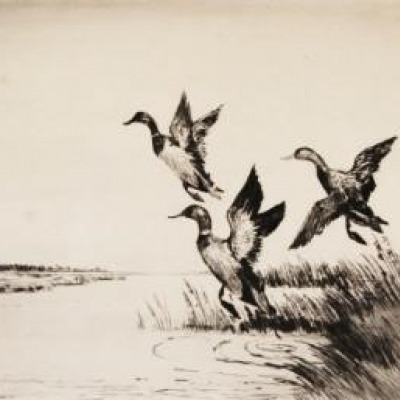 Mallards Away by Joseph Day Knap,1949 Etching